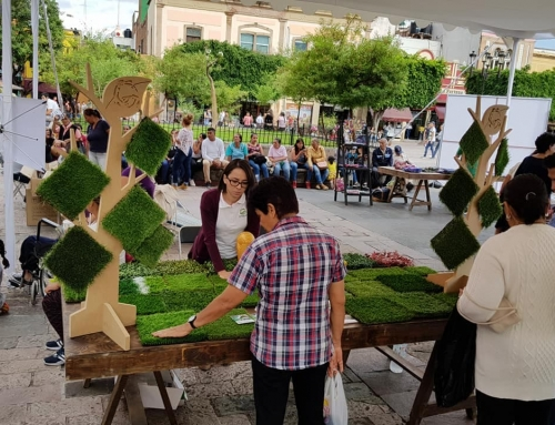 SanHe Grass be showed in León,Mexico by our Client.